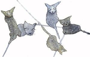 catsblog6